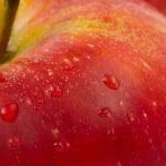 CEO Tim Cook neemt de diversiteit van Apple onder de loep
