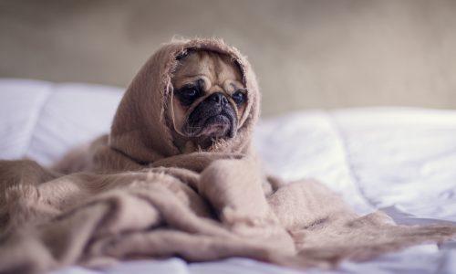 Uitslapen in het weekend is dus wél gezond voor je