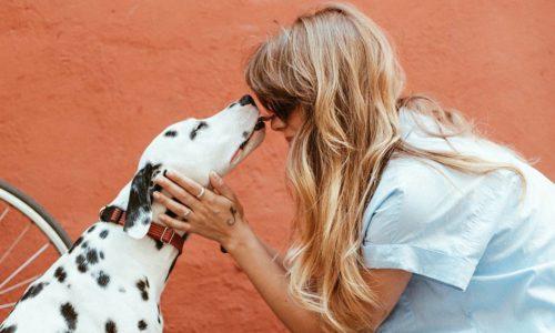 huisdier knuffelen